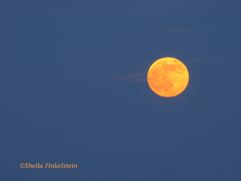 moon orange bluesky1 809 Lessons from Photographing Orange Full Moons