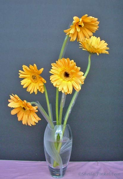 Yellow Gerber Daisy Bouquet